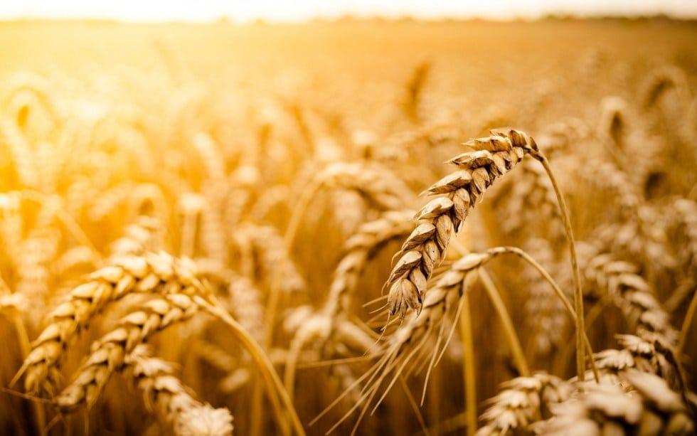 wheat storage mylar